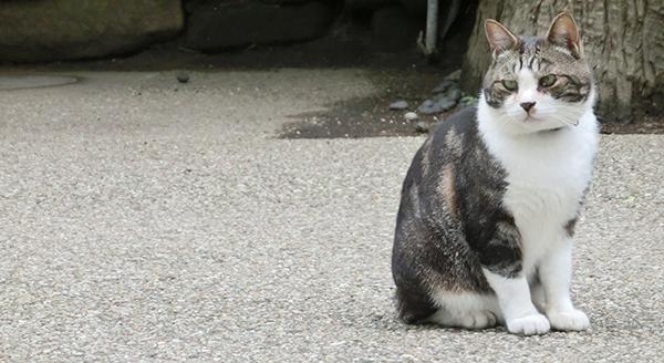 円覚寺の猫ちゃん