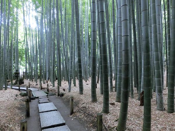報国寺の竹林2